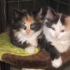 Zela & Blanca cats